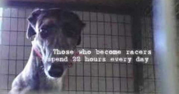 Greyhound Rescue I Found A Reason Must See Short Video Worth Watching 3 Greyhound Rescue Greyhound Greyhounds Racing