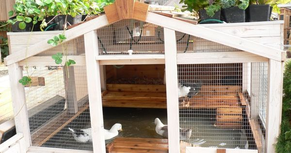 duck pond - clever design using aquaponics - recycles the water to