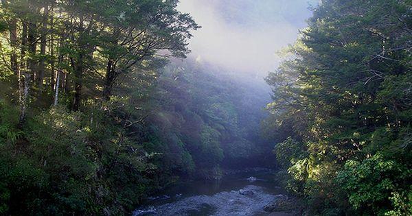 Kaitoke Regional Park North Island New Zealand New Zealand Travel Places To See
