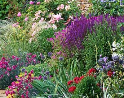 Tried and true perennials for your garden haveindretning for Ornamental grasses that stay green all year