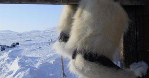 arctic bay nunavut mens parka red
