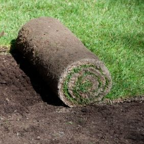 Establishing Turfgrass Seed Vs Sod No Grass Backyard Diy Lawn Growing Grass