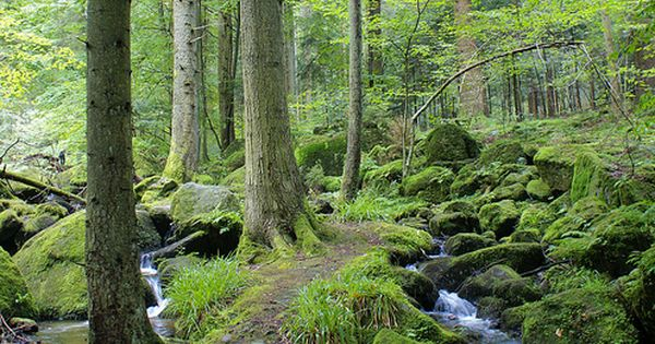 Black Forest Germany I Would Love To Go Back An Hike Here Again The Most Beautiful Place Ive