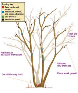 Pin On How Does Your Garden Grow