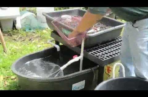 Aquaponics system design fish tank aquaponics for Aquaponics fish food
