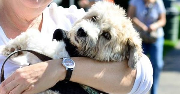 Adopt Charlie Bear In Chicago Suburb On Petfinder Charlie Bears Little Dogs Havanese