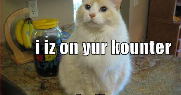 I Iz On Yur Kounter Kulin Yur Tee Cats Kittens Tees