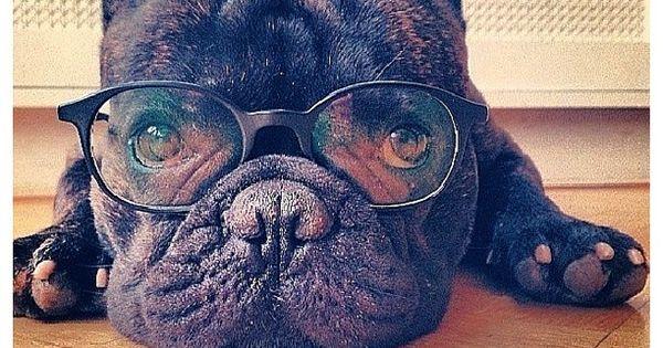 French bulldog, Boss the french bulldog on Instagram. Swedens celebrity dog! @bossthefrenchbulldog