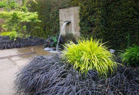 black mondo grass  u0026 japanese forest grass