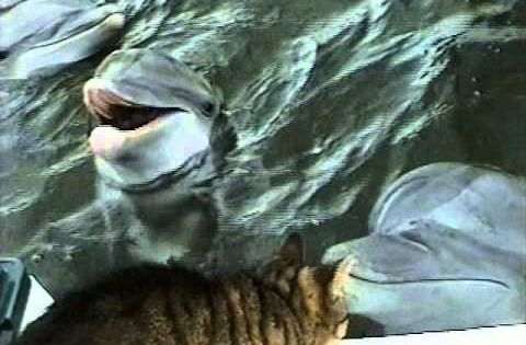 ▶ Cat and Dolphins playing together - YouTube. Cat and Dolphin playing