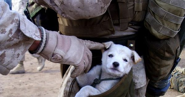 Pocket Pet - A small puppy wondered up to U.S. Marines from
