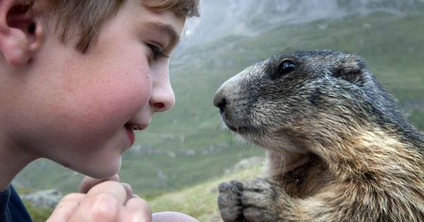 Eight-year-old Matteo Walch and his marmot friend. Apparently, Matteo and his family