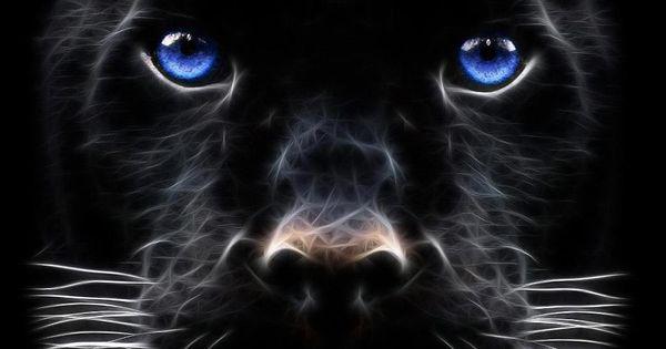 Fractal Cats Fractal Cats Pinterest Cats, Fractals