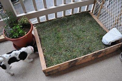 DIY Patio Dog Grass... Great idea for apartment living and no fenced