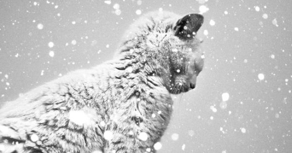 Benoit Courti - Black & White \snowcat