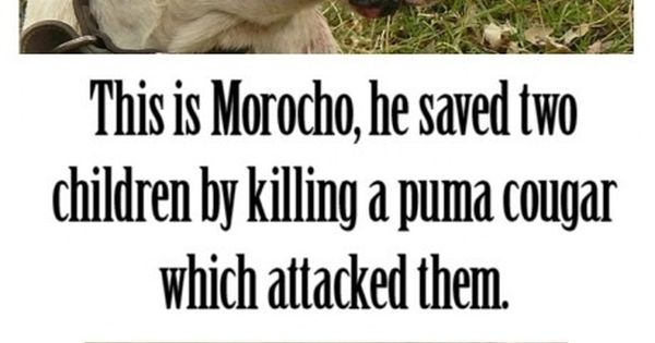 This is what pitbulls do! Everybody says they are a bad dogs,
