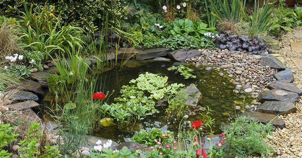 Make a wildlife friendly pond with a range of plants and for Shallow garden pond