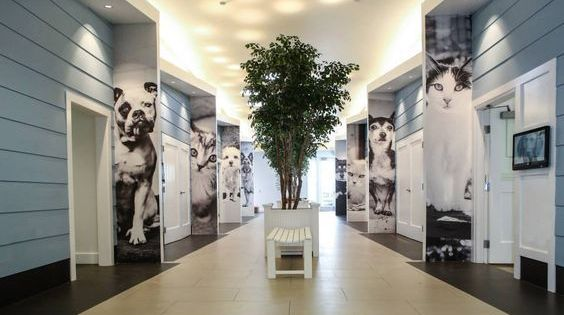 Pin By Antonin Giraud On Sf Spca Vision With Images Animal Shelter Design Pet Clinic Dog Boarding Kennels