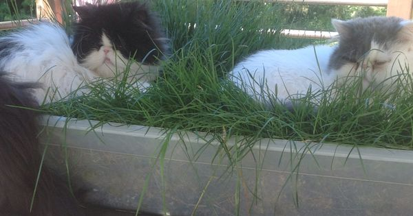 Cat Grass Use A Rubbermaid Under Bed Storage And Drill 4