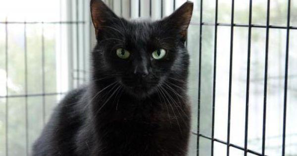 Balthazar Pets Found Cat Cats