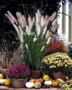 Ziergraser Im Topf Fur Terrasse Und Balkon Pflanzen Ziergras Gras