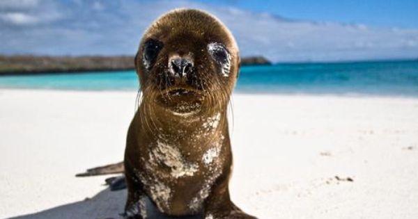 Una Foca Bebe Relajandose En Caribe Foca Foca Bebe Animales