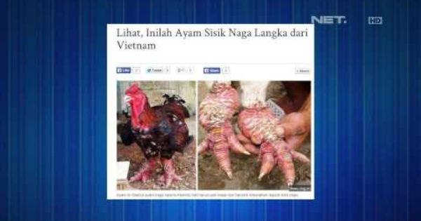 Ayam Ras Dongtao Berkaki Naga Dijual Dengan Harga 16 Juta Rupiah Tonight S Headline Tonight Show Naga
