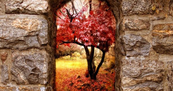 Autumn. portal window fall autumn red yellow color stone arch tree