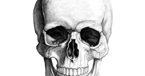 how to draw realistic skull and pirate skull liked on ...