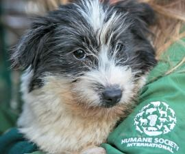Two Hundred Dogs From South Korean Dog Meat Farm Rescued And