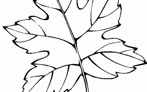 Hoja De Otono Para Colorear Para Para Para Hojas Del Otono: Dibujos De Hojas De Flores De Otono Para Colorear