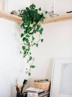 Filodendro Hoja Corazón Filodendro Hoja Corazón Una Planta De Interior Plantas De Interior Plantas Interior Decoracion Decoracion Con Plantas Artificiales