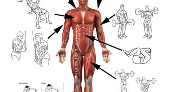 Basic Front Body Exercises Chart - Healthy Fitness ...