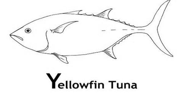 Tuna Fish Coloring Sheets Coloring Pages Fish Coloring Page