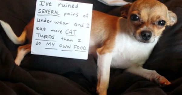 shaming funny dog photos | Dog shaming8 Funny: Dog shaming