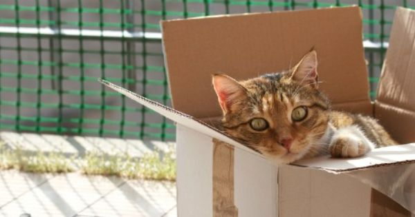 Find Helpful Tips And Information For Moving Your Cat Long Distance Includes Tips For Before During And Even After The Move Takes Pl Cats Moving Moving Tips