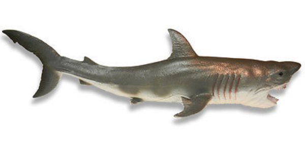 Megaladon Sharks Toys For Boys : Aaa xl great white shark quot toy model megalodon