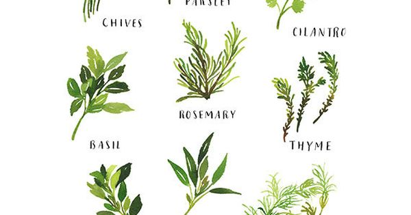 KITCHEN REMODEL Handmade Watercolor Archival Art Print- Culinary Herbs Illustration