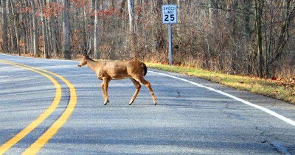 5 Safe Driving Tips During Michigan Deer Season Deer Hunting