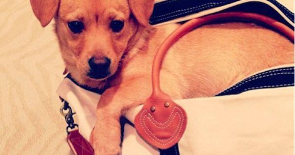 Lauren Conrad's pup Fitz is TOO CUTE!