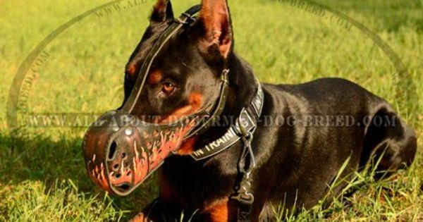 Doberman Leather Dog Muzzle For Training And Walking Doberman