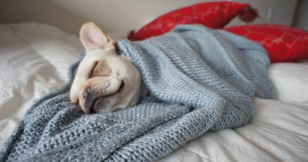 French Bulldog Knit Blanket for Dogs Handmade by EsmeraldasCrochet, €50.00