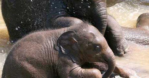 Thailand S Most Luxurious Ethical Elephant Experience Com Imagens Fotos De Animais Animais Fotos