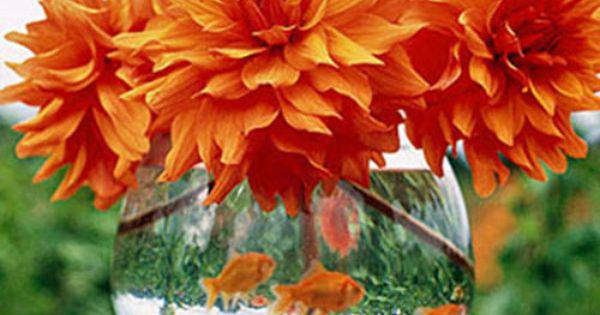 Dahlias and goldfish! Perfect Fall colors Image via Midwest Living - Another