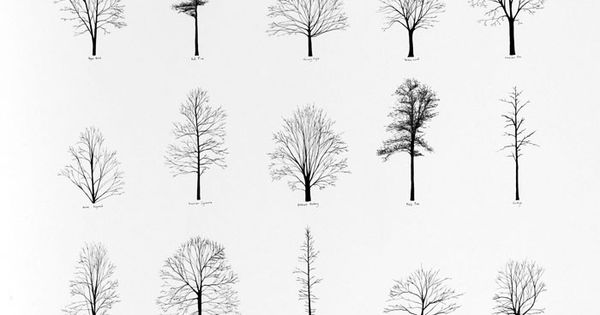 katie holten  trees of the usa  2006