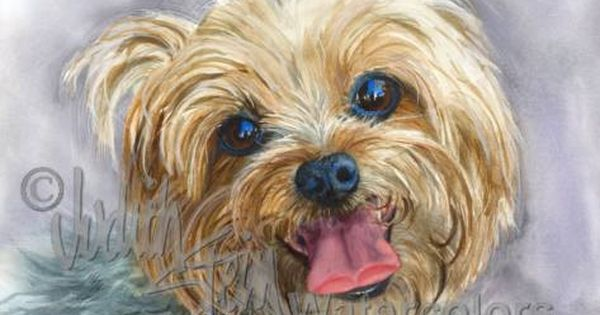 Yorkshire Terrier Yorkie Akc Toy Pet Portrait Dog Art Watercolor Painting Print Picture Wall Art Home Decor Clancy Judith Stein Pintura Perro Dibujos