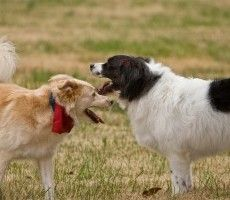 Find Local Off Leash Dog Parks Near Me Fenced Dog Parks Dog Park Dogs Dog Leash