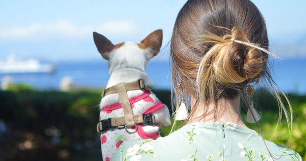 Are You Starting To Feel Those Summer Vibes Creeping In We Are So Ready With Images Outdoor Dog Dog Clothes Pets