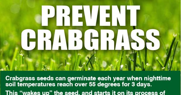 When To Apply Crabgrass Preventer Blain S Farm Fleet Blog Crab Grass Crabgrass Preventer How To Apply