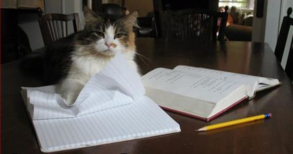 Homework Cat